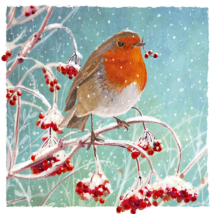 Robin in the Hedgerow Christmas Card 2021