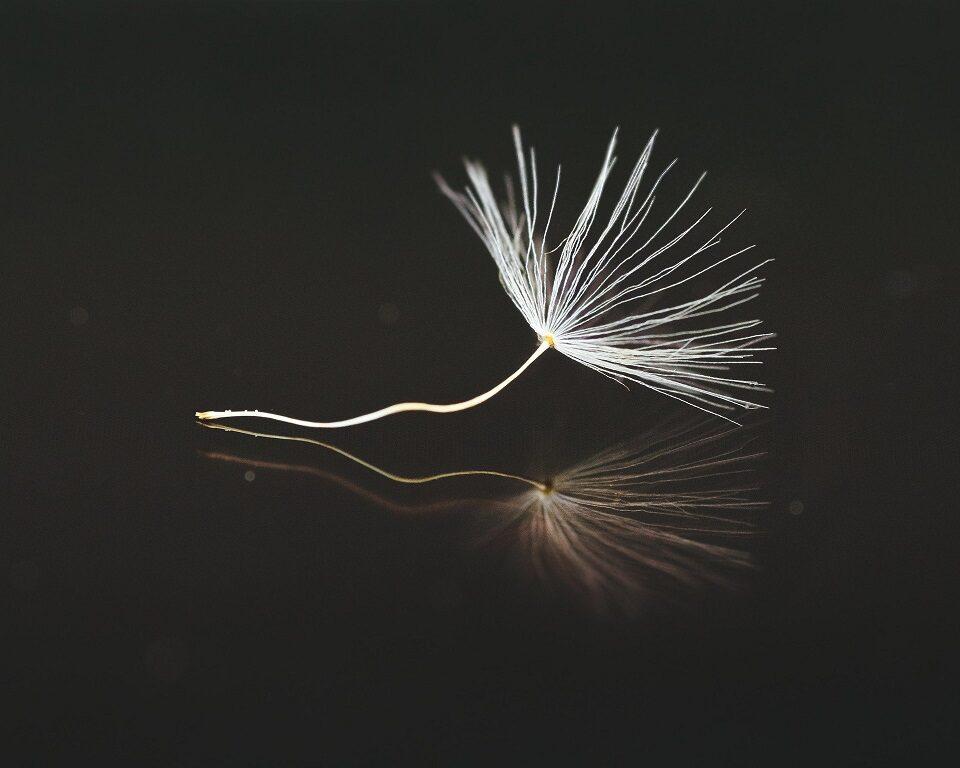seeds-3412027_1920